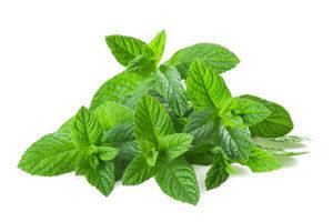 mint plants
