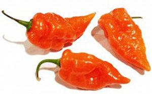 Pepper-Habanada