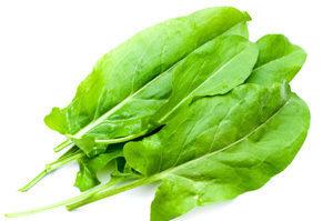 Sorrel-Green