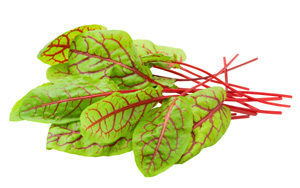 Sorrel-Red-Veined