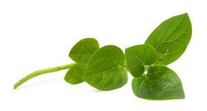 Spinach-Malabar