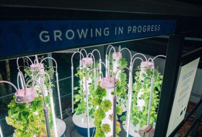 Growing in progress
