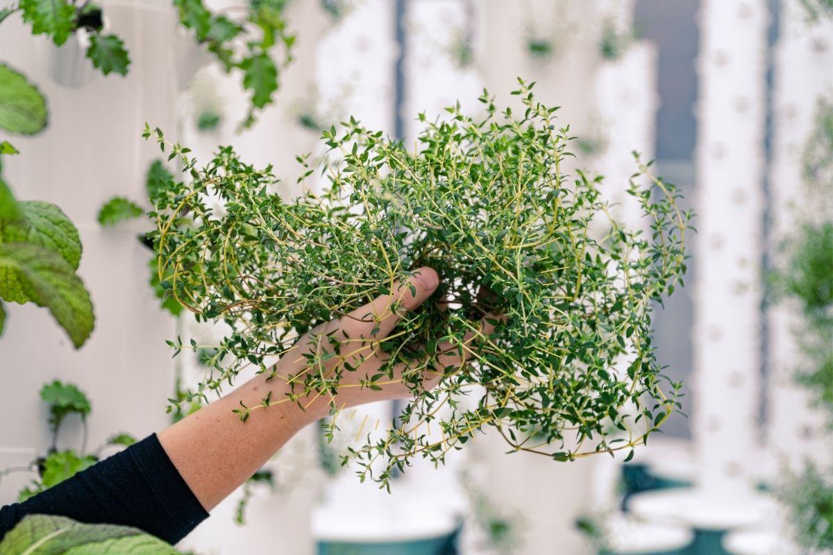 Blog_Ways to Use Your Copiana Harvest