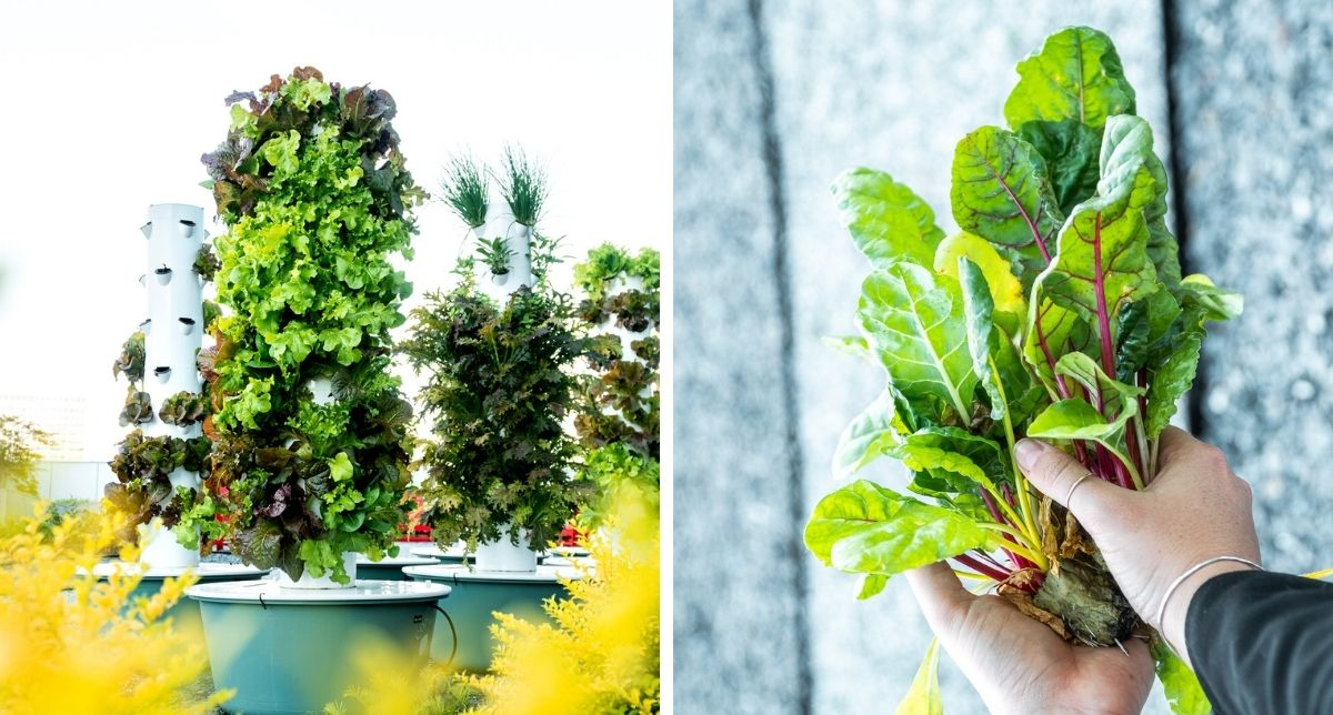 Blog_The Commercial Property Guide to Vertical Farming-min